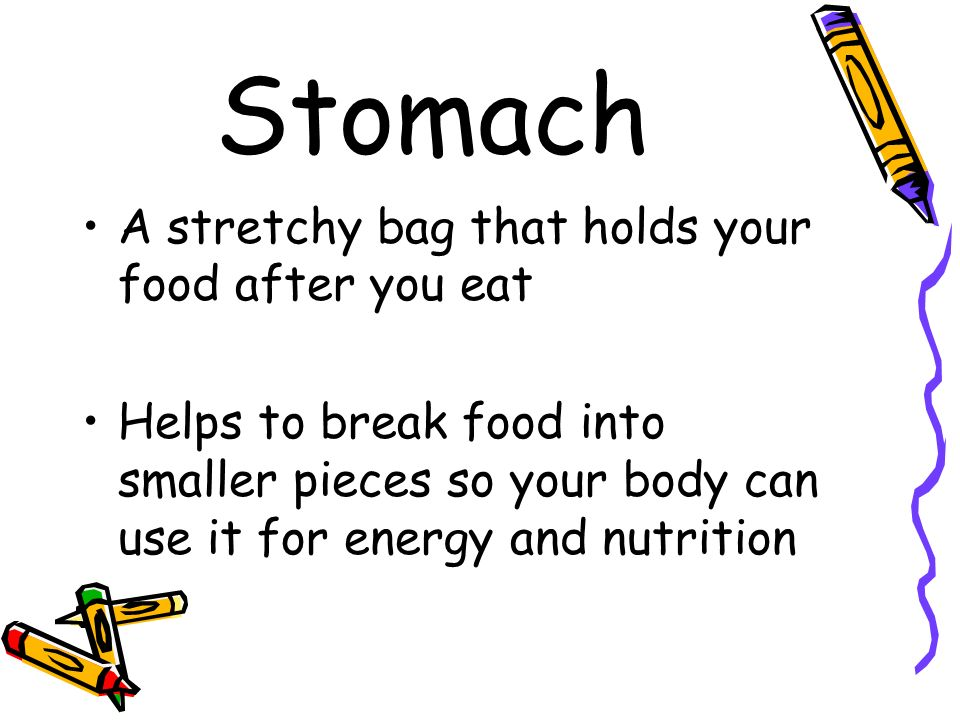 Stomach A stretchy bag that holds your food after you eat