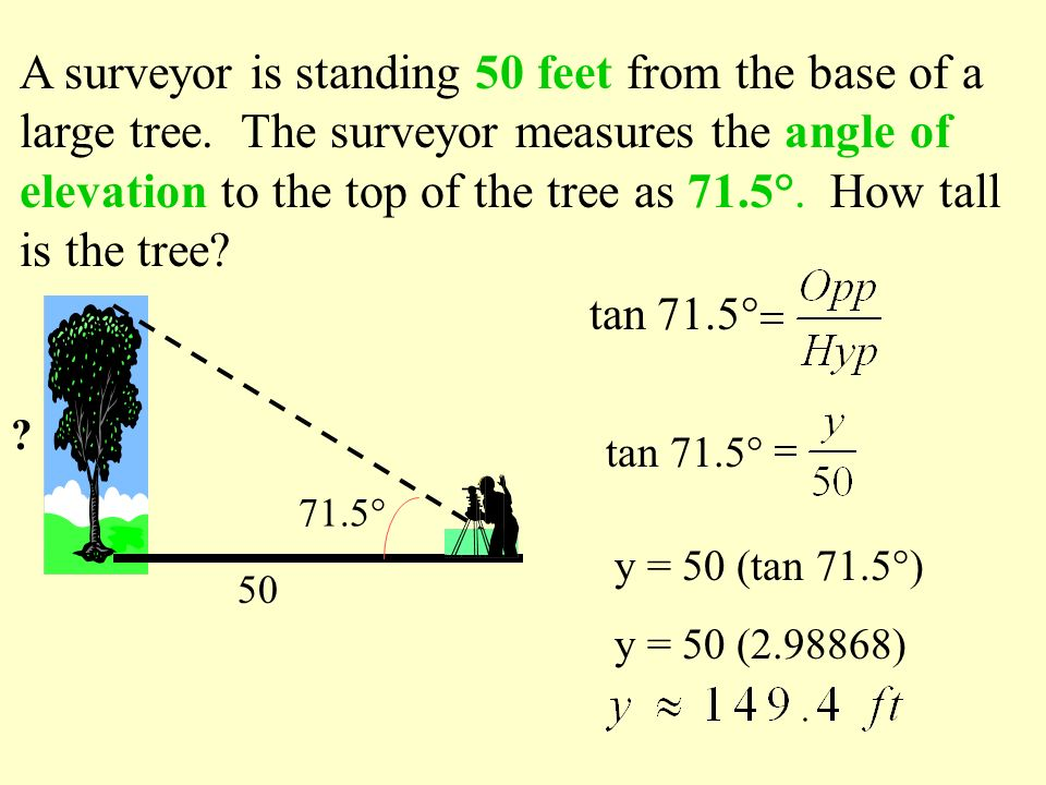 A surveyor is standing 50 feet from the base of a large tree