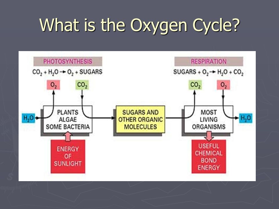 What is the Oxygen Cycle