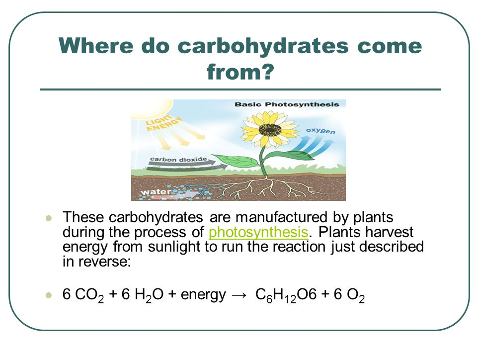 Where do carbohydrates come from
