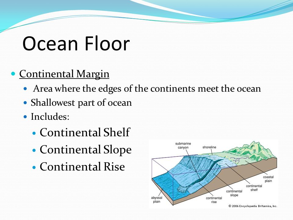 Ocean Floor Continental Shelf Continental Slope Continental Rise
