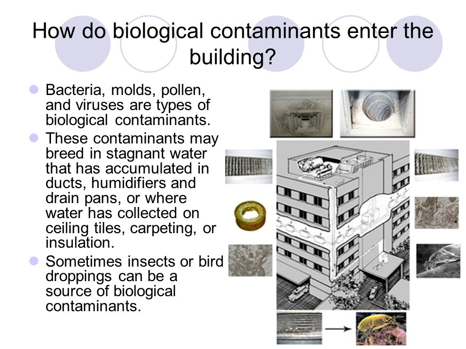 How do biological contaminants enter the building