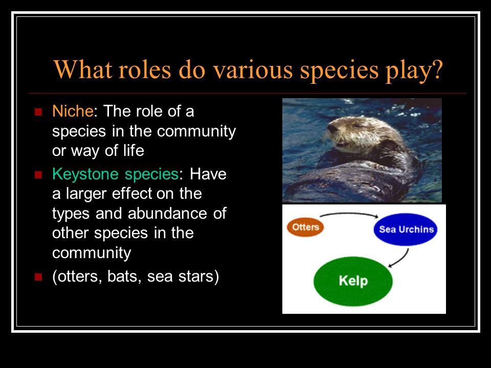 What roles do various species play