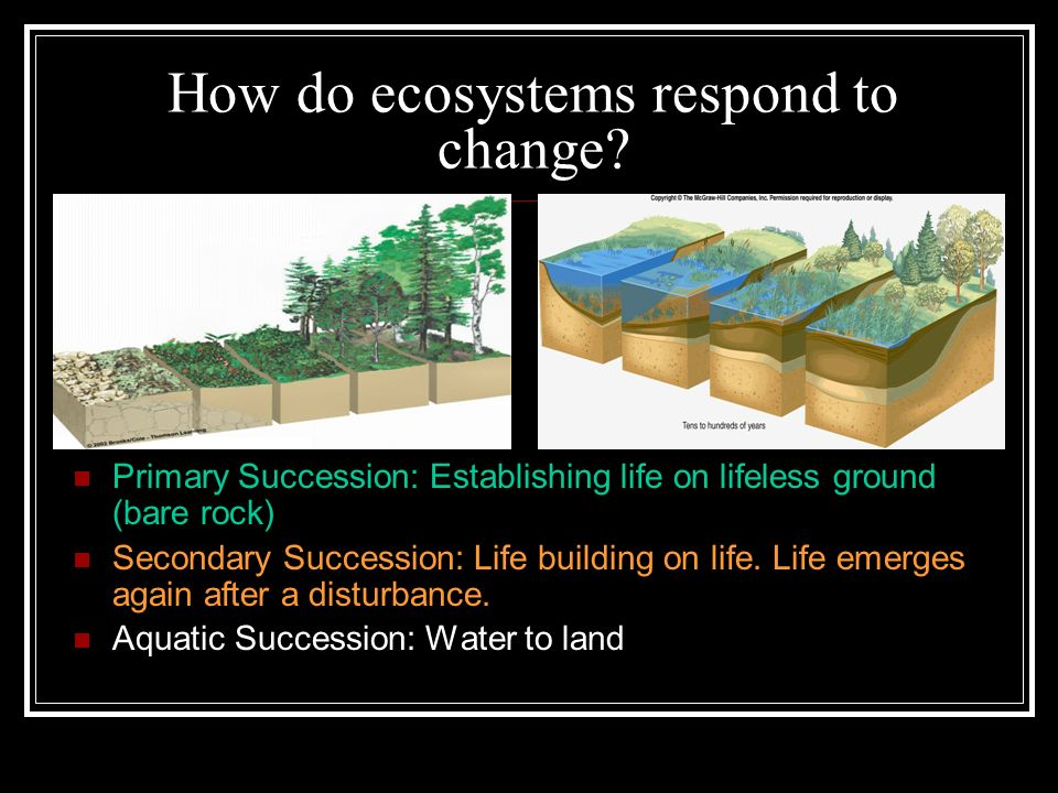 How do ecosystems respond to change