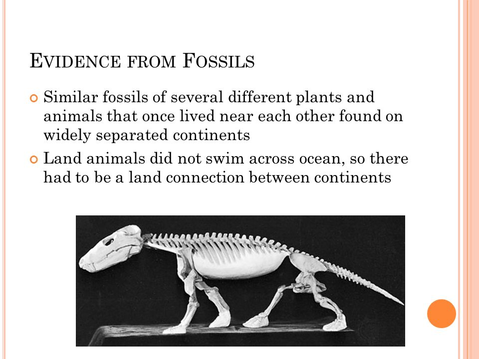 Evidence from FossilsSimilar fossils of several different plants and animals that once lived near each other found on widely separated continents.