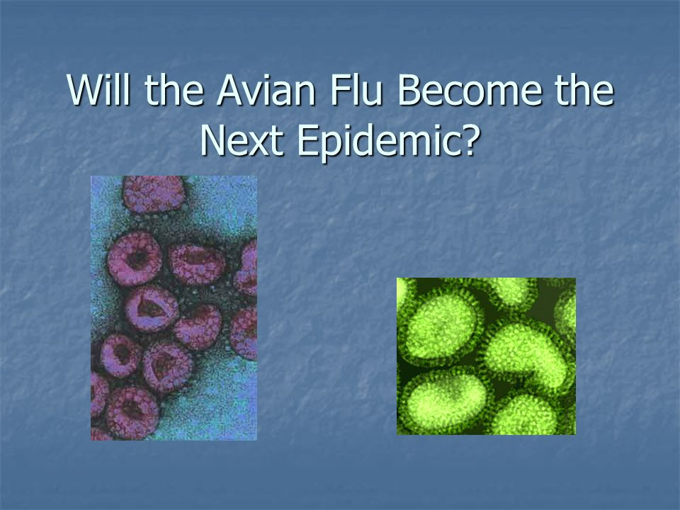 Will the Avian Flu Become the Next Epidemic