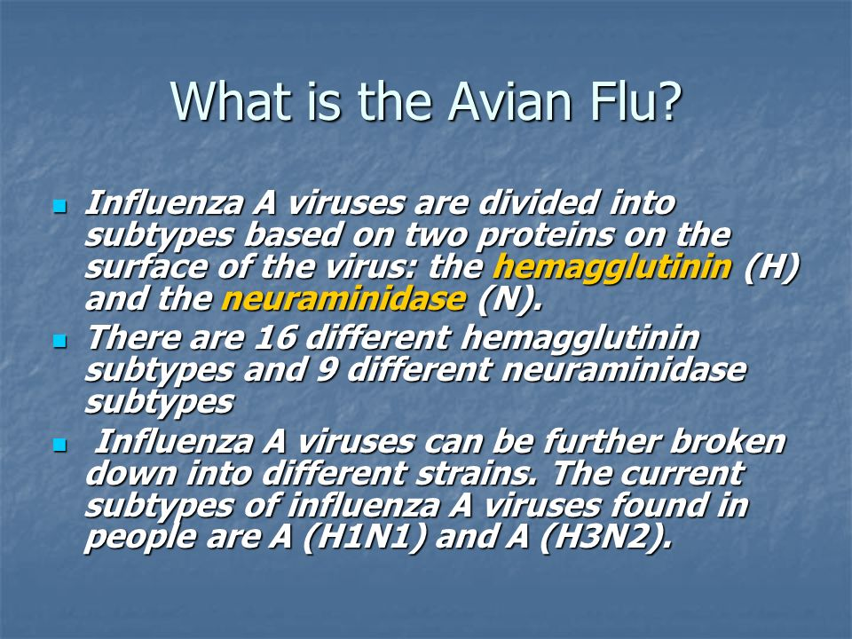 What is the Avian Flu