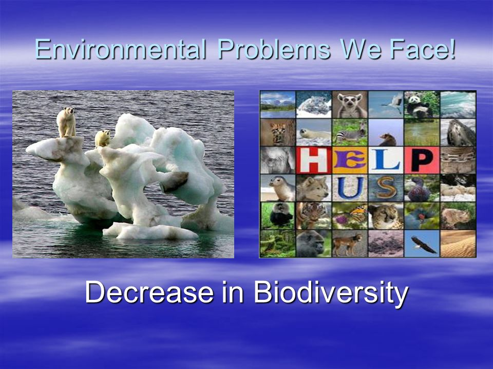 Environmental Problems We Face!