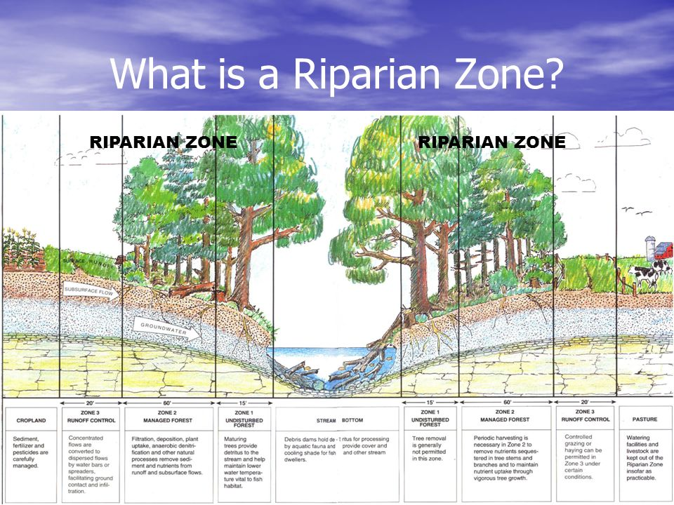 What is a Riparian Zone RIPARIAN ZONE RIPARIAN ZONE