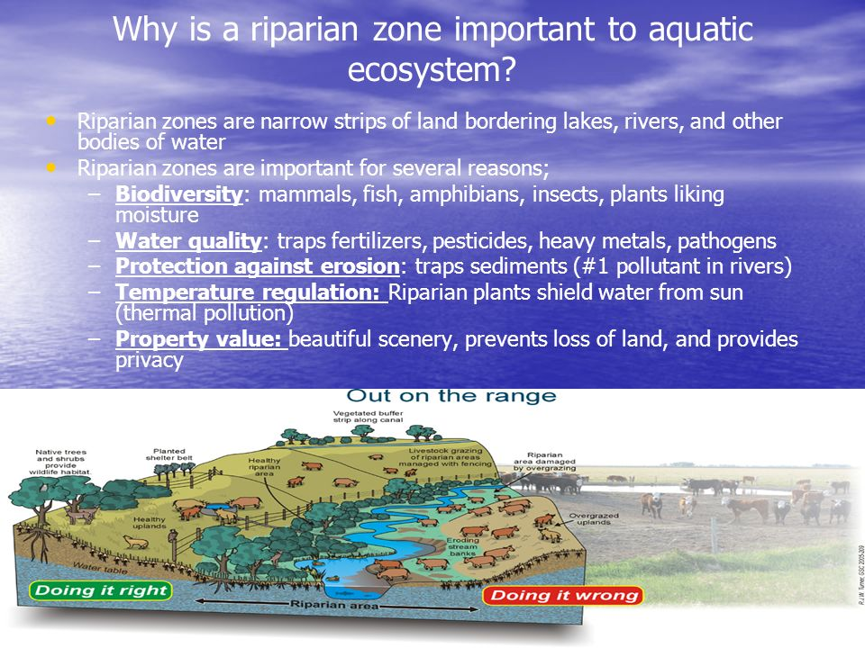 Why is a riparian zone important to aquatic ecosystem