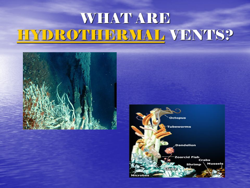 WHAT ARE HYDROTHERMAL VENTS