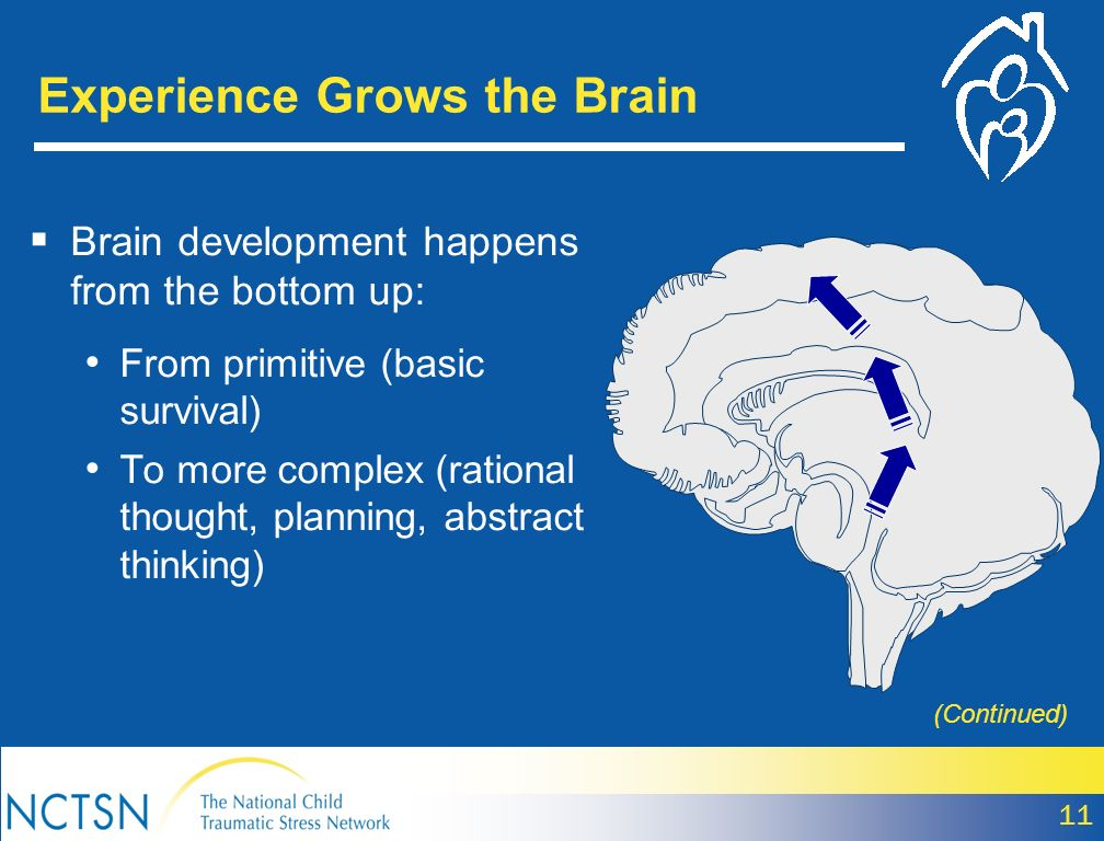 Experience Grows the Brain