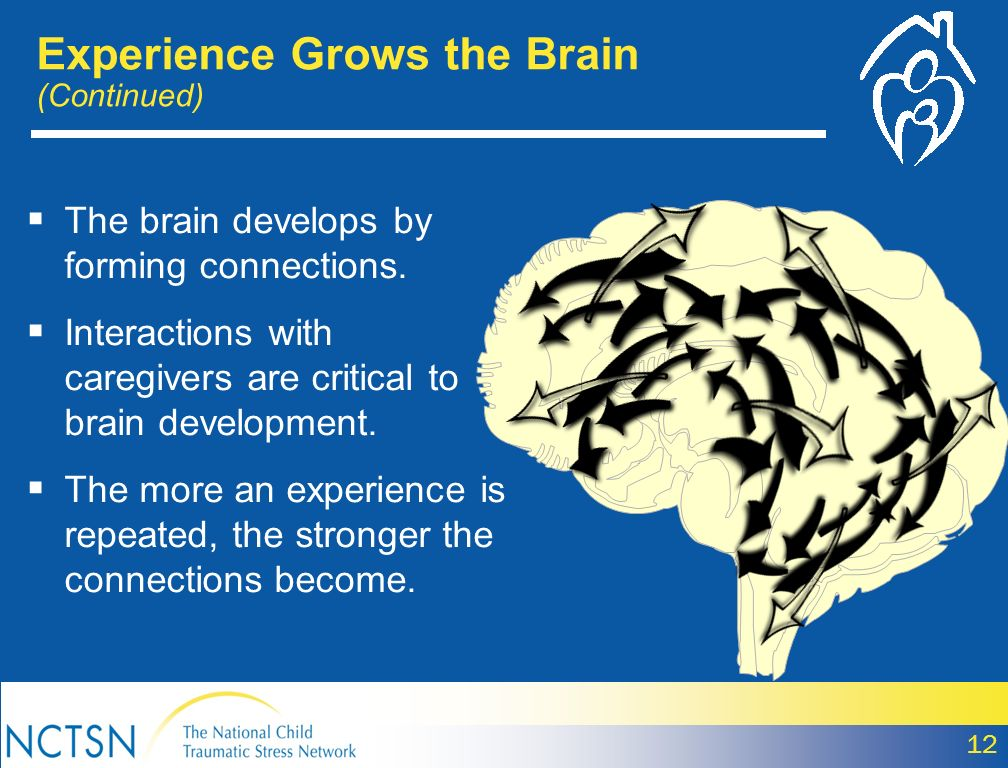 Experience Grows the Brain (Continued)