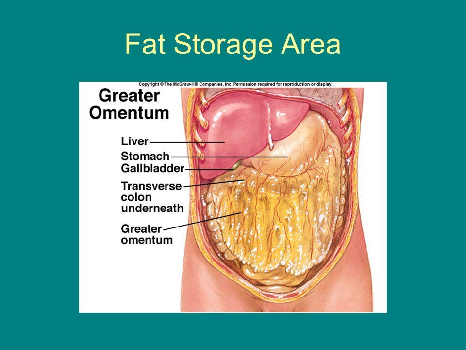 Fat Storage Area