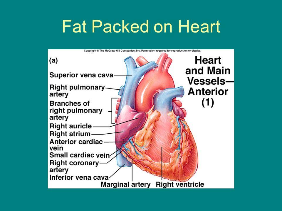 Fat Packed on Heart