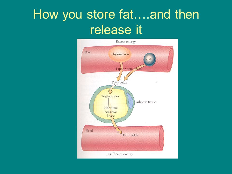 How you store fat….and then release it