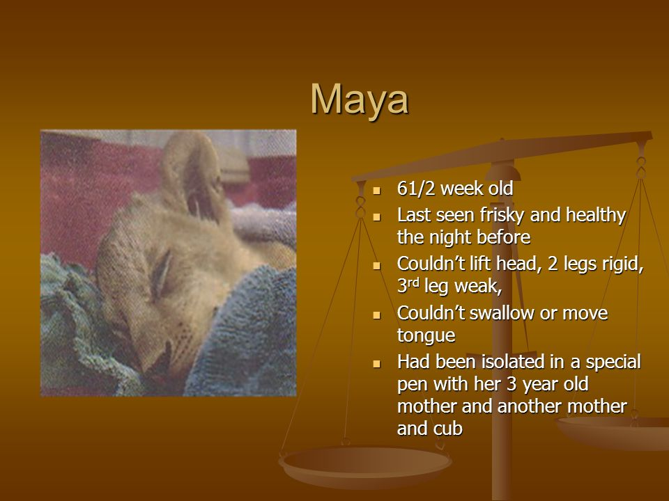 Maya 61/2 week old Last seen frisky and healthy the night before