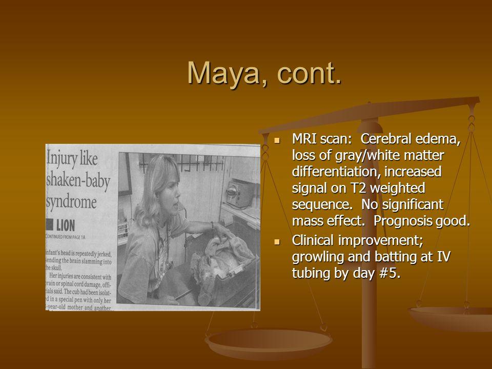 Maya, cont.