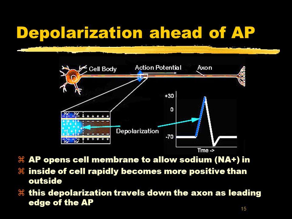 Depolarization ahead of AP