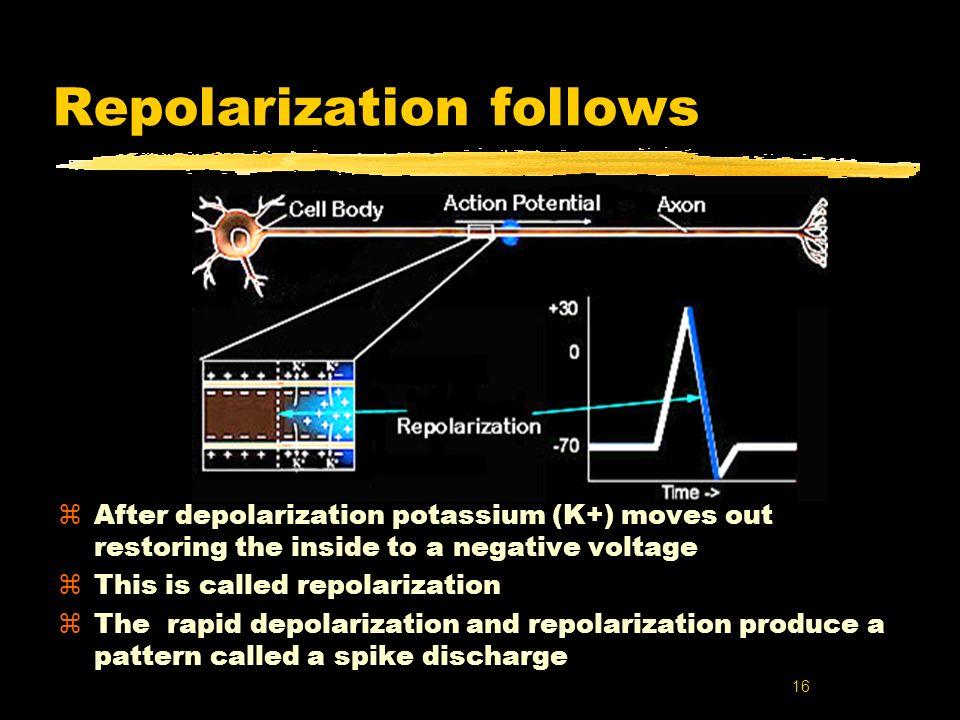 Repolarization follows