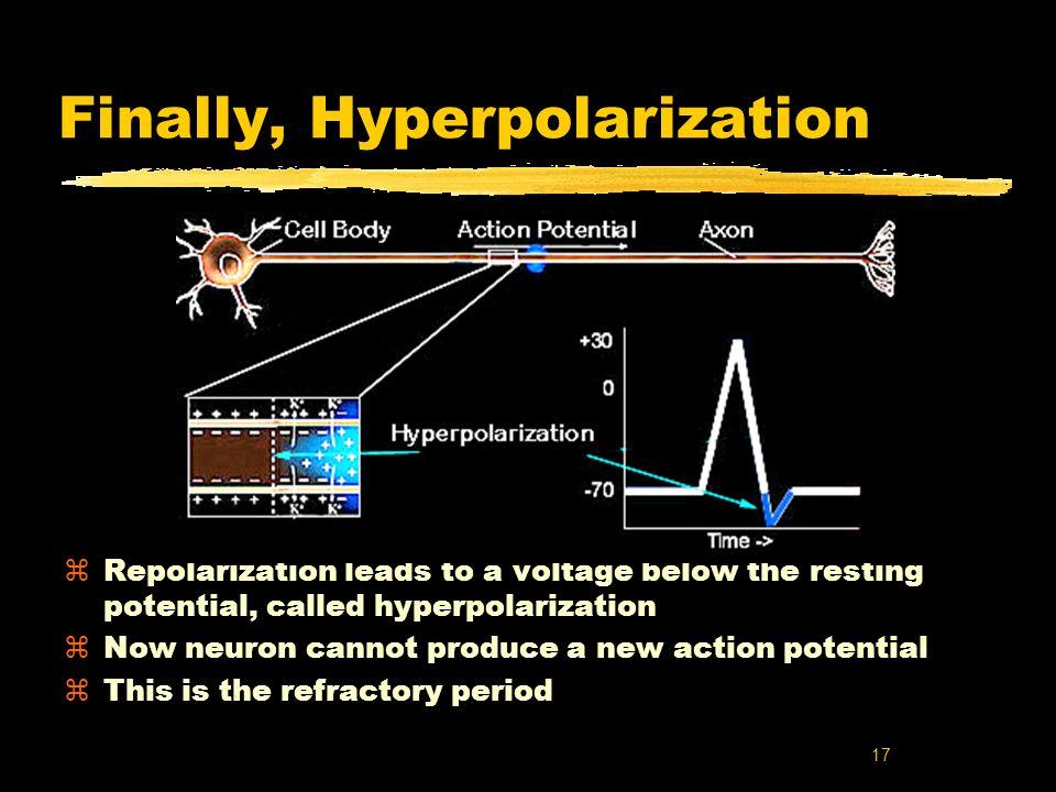 Finally, Hyperpolarization