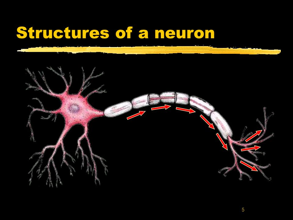 Structures of a neuron Key words: Neuron; sructures of neurons