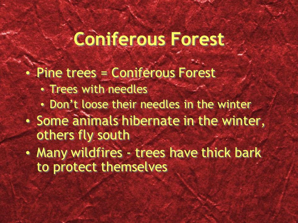Coniferous Forest Pine trees = Coniferous Forest