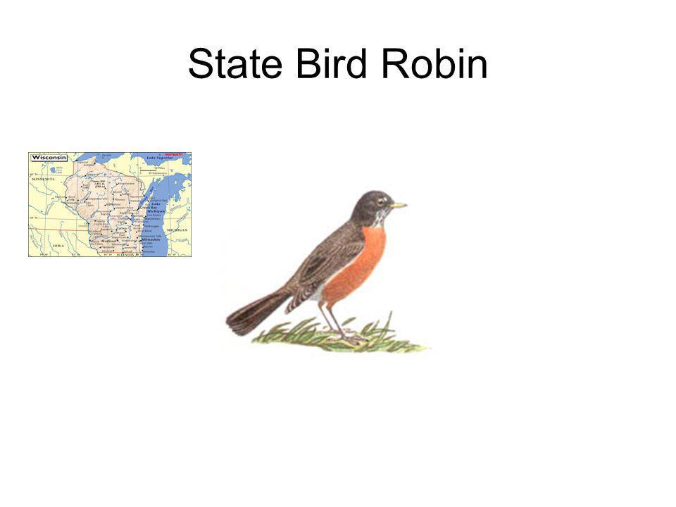 State Bird Robin