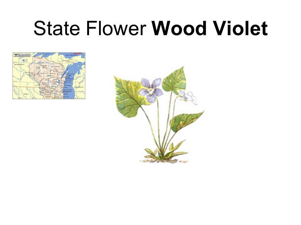 State Flower Wood Violet