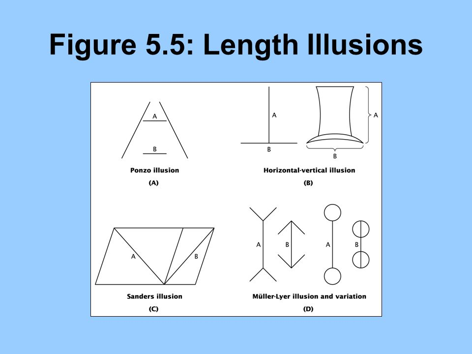 Figure 5.5: Length Illusions