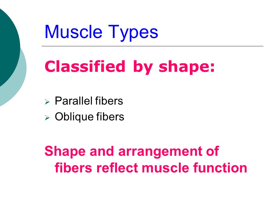 Muscle Types Classified by shape: