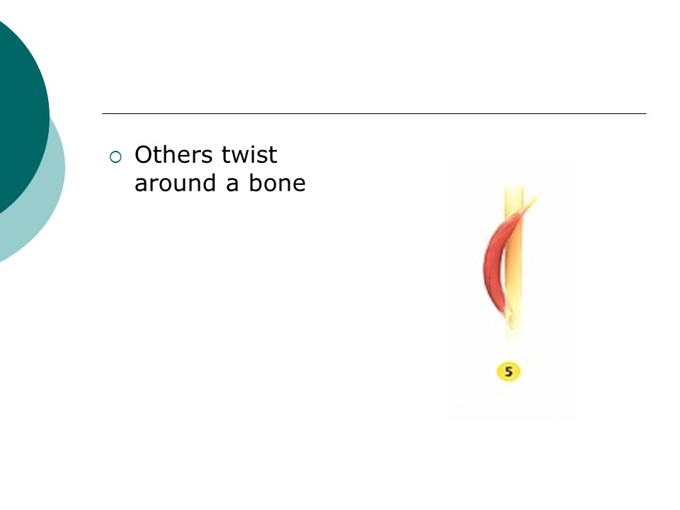 Others twist around a bone