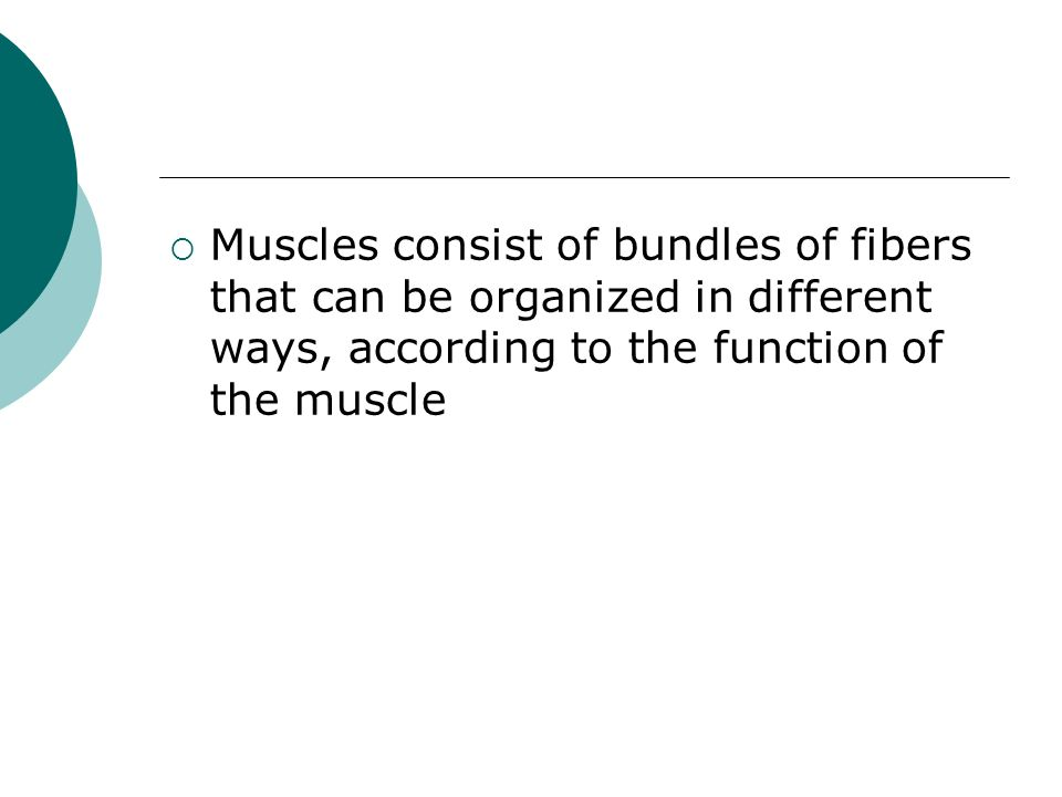 Muscles consist of bundles of fibers that can be organized in different ways, according to the function of the muscle