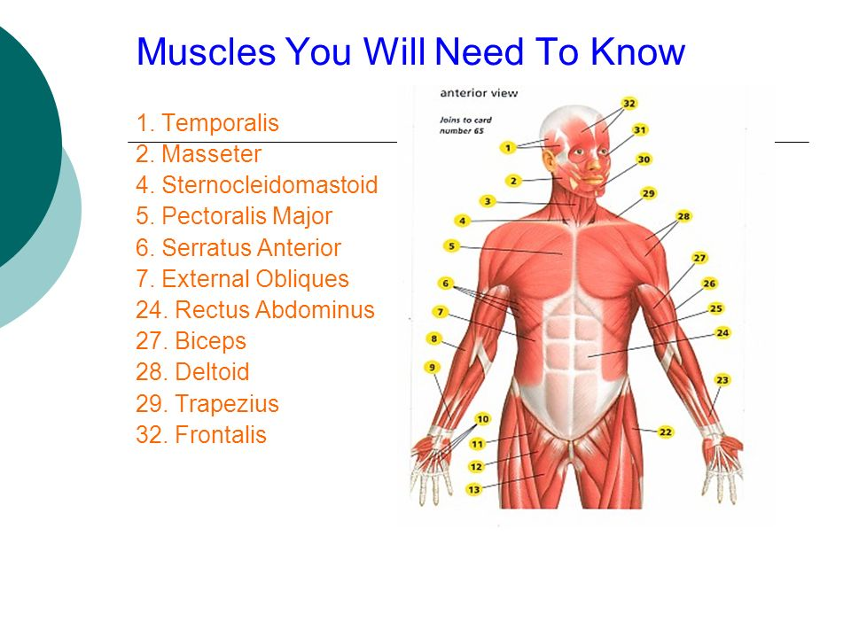 Muscles You Will Need To Know