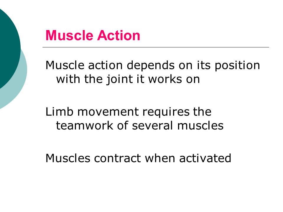 Muscle Action Muscle action depends on its position with the joint it works on. Limb movement requires the teamwork of several muscles.