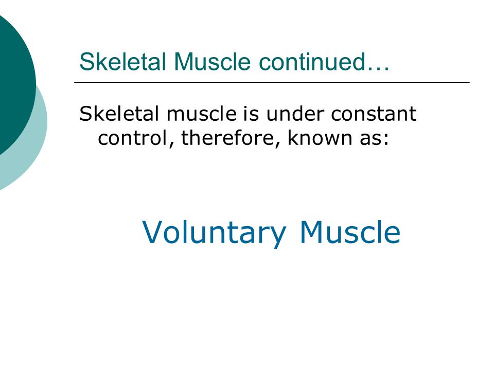 Skeletal Muscle continued…