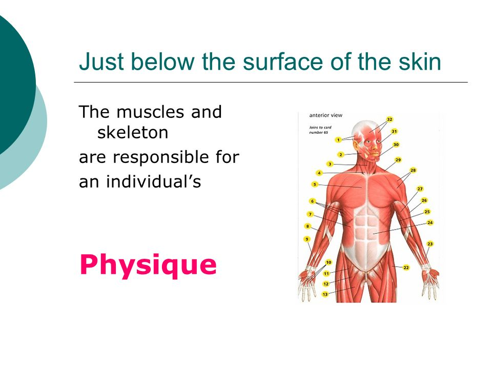 Just below the surface of the skin