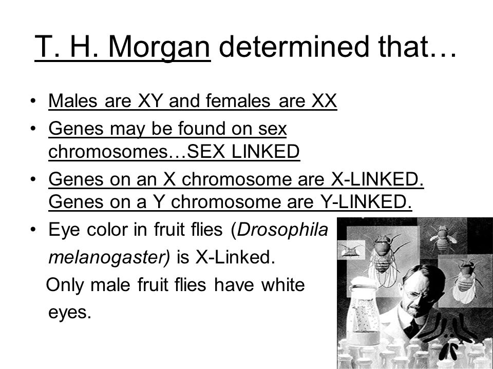 T. H. Morgan determined that…