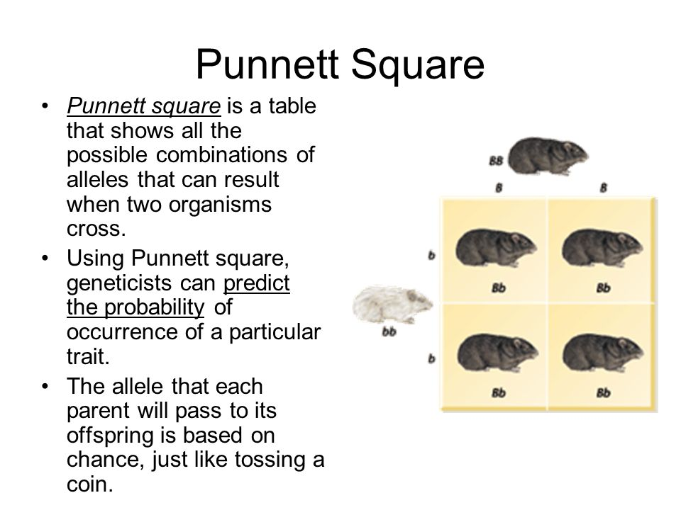 Punnett Square Punnett square is a table that shows all the possible combinations of alleles that can result when two organisms cross.