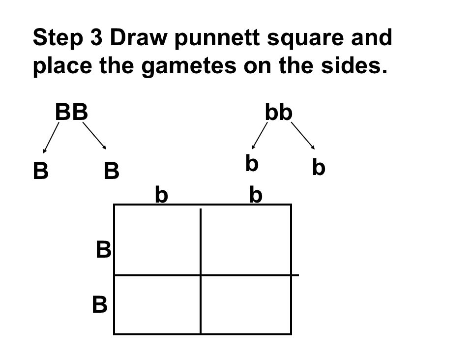 Step 3 Draw punnett square and place the gametes on the sides.