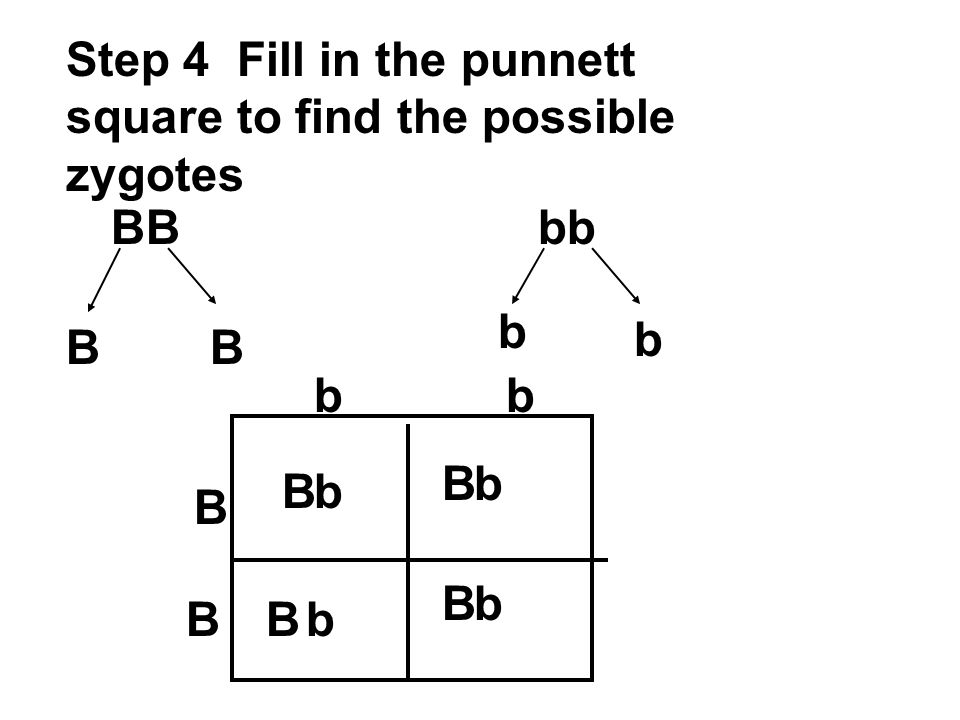 Step 4 Fill in the punnett square to find the possible zygotes