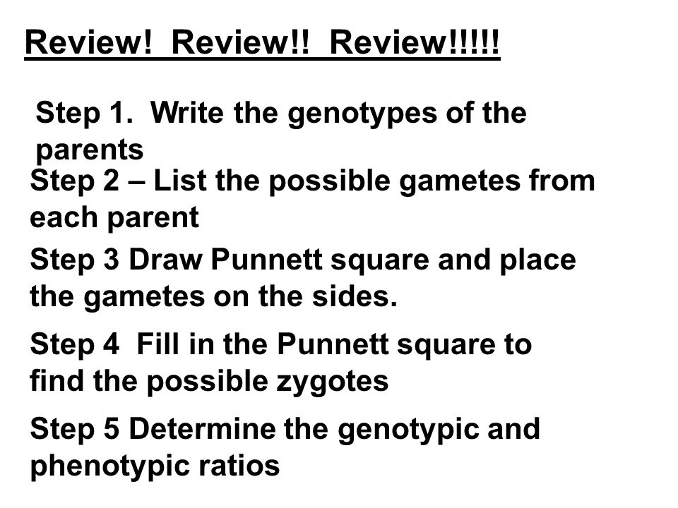 Review! Review!! Review!!!!! Step 1. Write the genotypes of the parents. Step 2 – List the possible gametes from each parent.