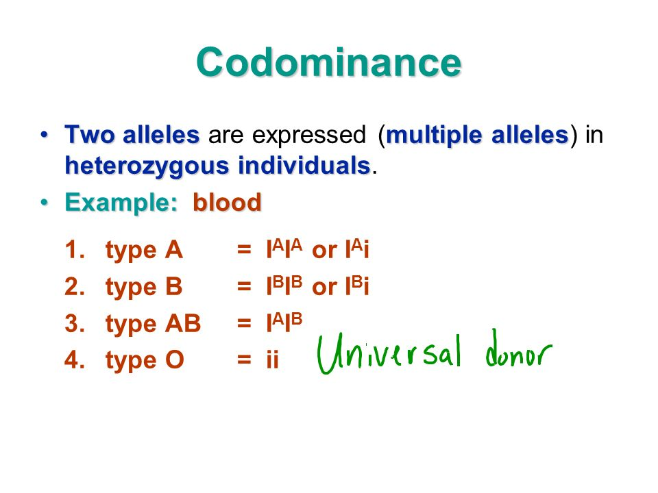 Codominance Two alleles are expressed (multiple alleles) in heterozygous individuals. Example: blood.