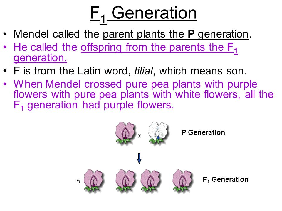F1 Generation Mendel called the parent plants the P generation.