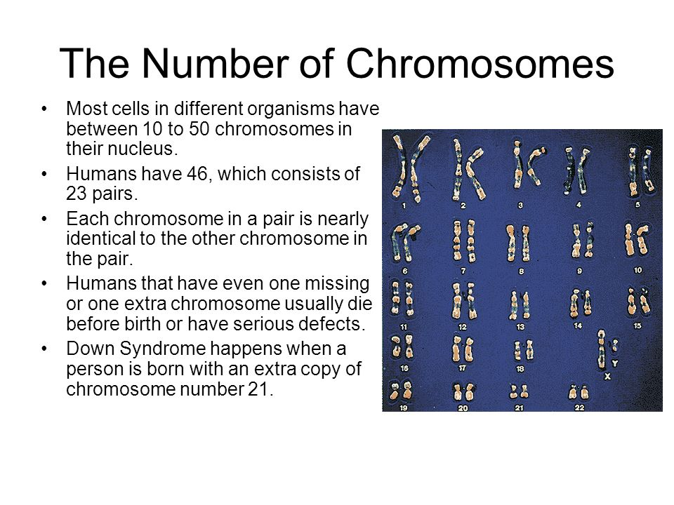 The Number of Chromosomes