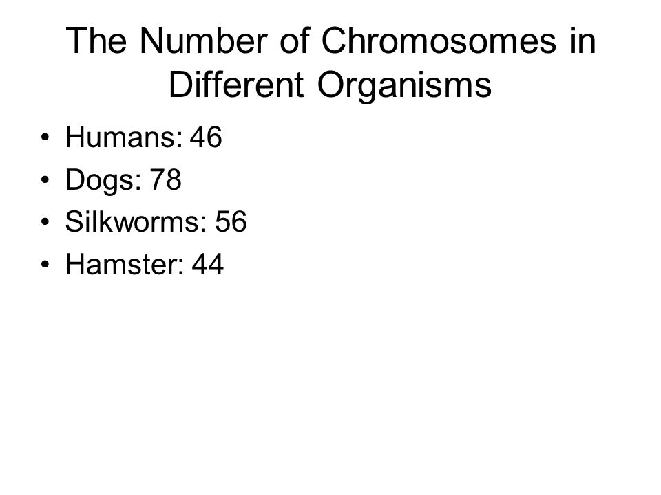 The Number of Chromosomes in Different Organisms