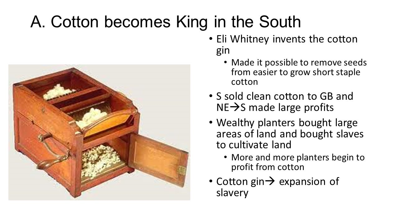 A. Cotton becomes King in the South