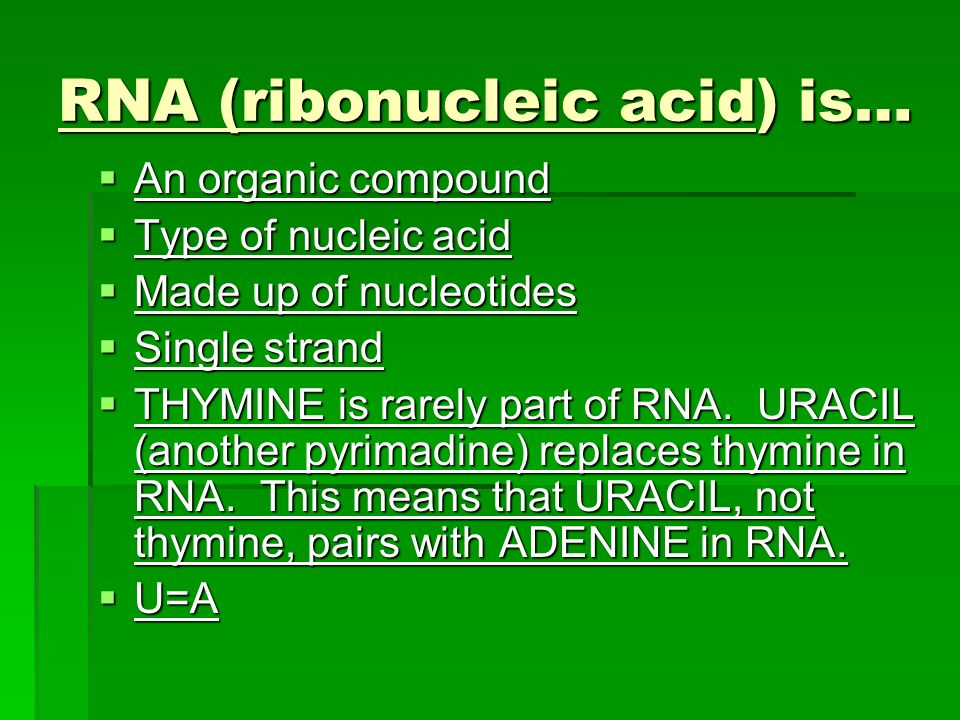 RNA (ribonucleic acid) is…