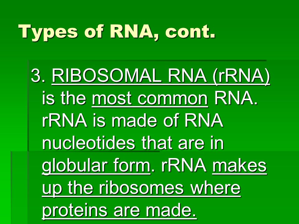 Types of RNA, cont.