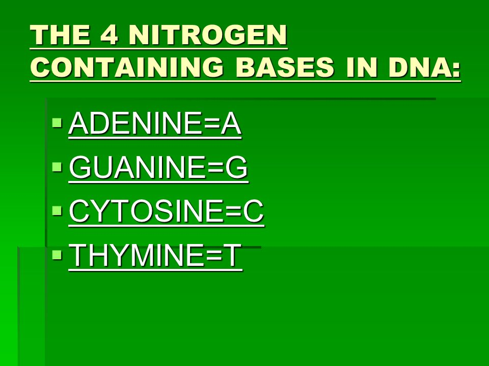THE 4 NITROGEN CONTAINING BASES IN DNA: